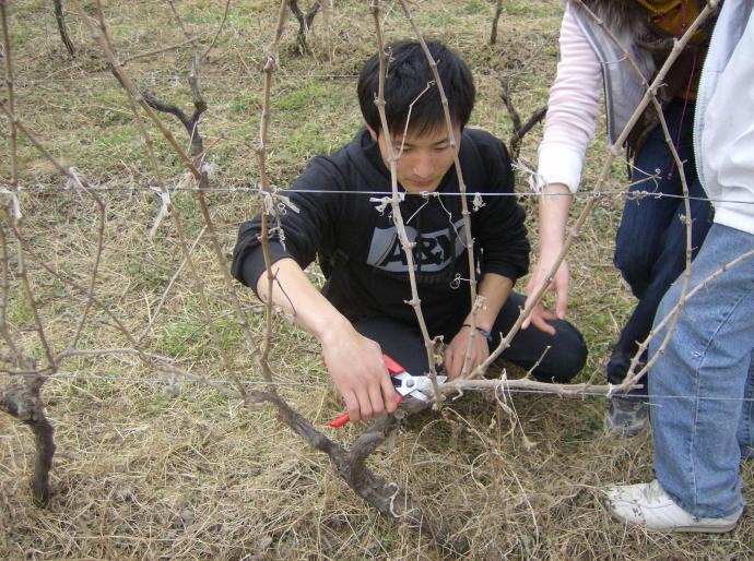 葡萄栽培课