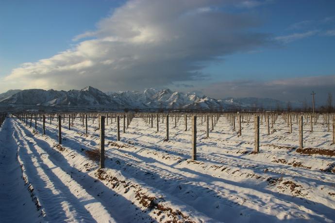 葡萄园雪景