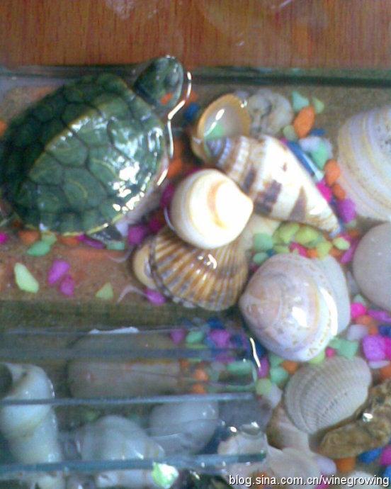 养的小乌龟